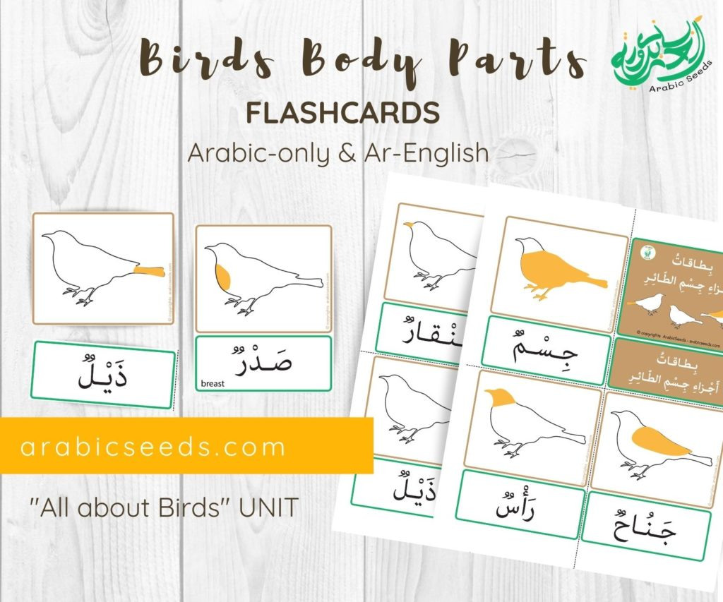 Birds body parts Arabic flashcards printable by Arabic Seeds