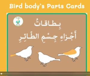 Video: Birds' body parts flashcards