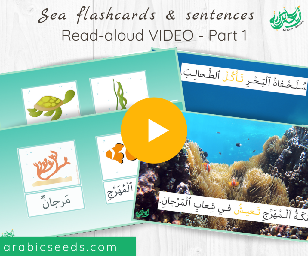 Arabic under the sea flashcards and sentences Read-aloud Video - Arabic Seeds themed units