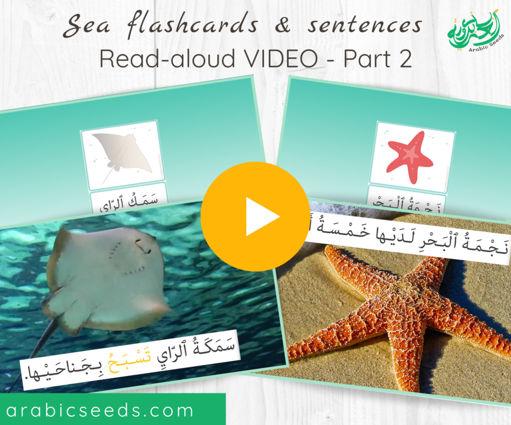 Arabic under the sea flashcards and sentences Read-aloud Video part 2 - Arabic Seeds themed units